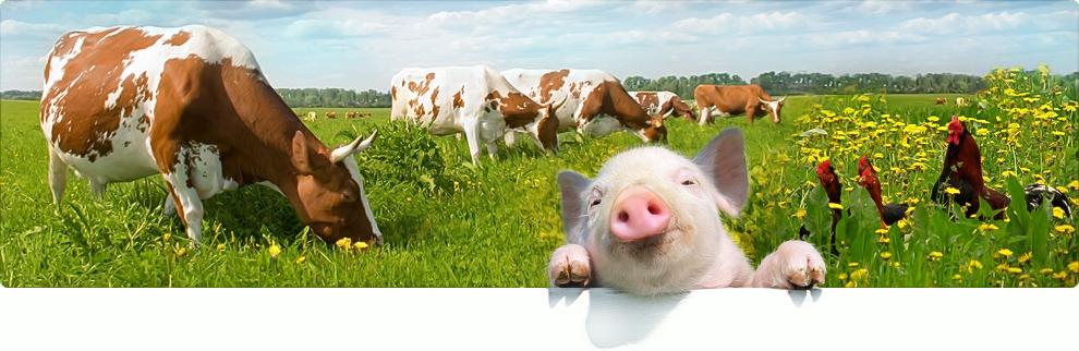 Производство премиксов для животных в домашних условиях